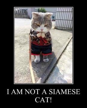I AM NOT A SIAMESE CAT!