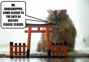 AH, GRASSHOPPER, COME CLOSER TO THE GATE OF DESTINY. CLOSER, CLOSER.