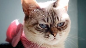 Is Sauerkraut Vying With Grumpy Cat for the Internet Throne?