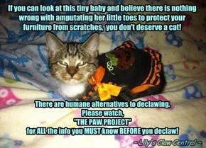 Baby Serifina