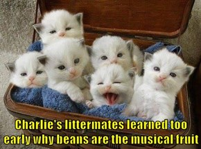 Charlie's littermates learned too early why beans are the musical fruit