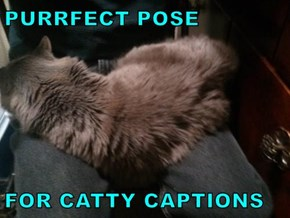 PURRFECT POSE  FOR CATTY CAPTIONS