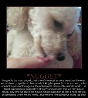 Some facts about *NUGGET*