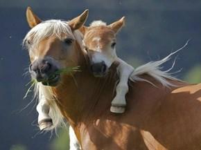Just a Little Horseback Riding