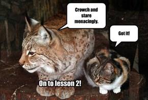 Ferocious Cat Lessons