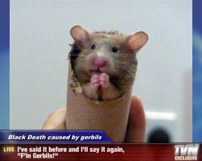 "Black Death caused by gerbils - I've said it before and I'll say it again, ""F'in Gerbils!"""