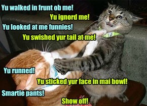 Why cats fight!