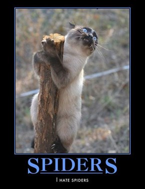 Bad News, Spiders Can Climb