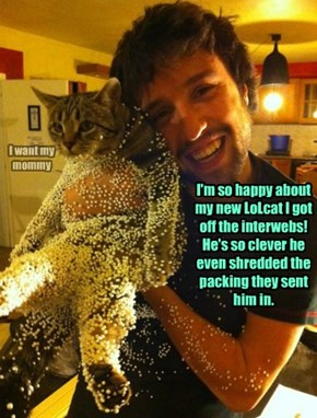 I'm so happy about my new LoLcat I got off the interwebs!  He's so clever he even shredded the packing they sent him in.