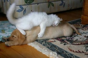 Cats Are Teaching Dogs to be the Fluffy Pillows they Are
