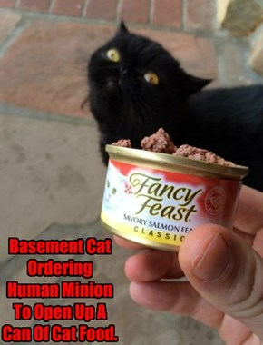 Basement Cat Ordering Human Minion To Open Up A Can Of Cat Food.