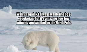Walrus again? I always wanted to be a vegetarian, but it's amazing how few lettuces you can find on the North Pole.