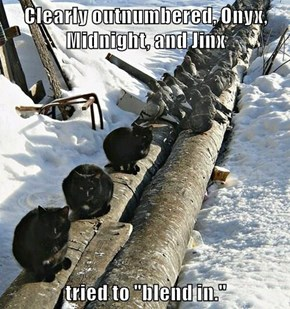 """Clearly outnumbered, Onyx, Midnight, and Jinx  tried to """"blend in."""""""