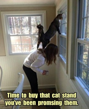 Time  to  buy  that  cat  stand  you've  been  promsing  them.