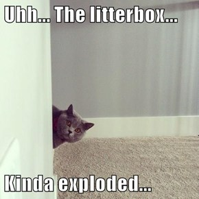 Uhh... The litterbox...  Kinda exploded...