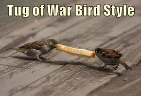 Tug of War Bird Style