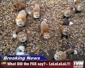 Breaking News - What DID the FOX say?~ LoLoLoLoL!!!