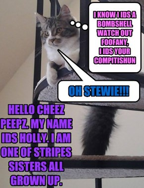 HELLO CHEEZ PEEPZ. MY NAME IDS HOLLY. I AM ONE OF STRIPES SISTERS ALL GROWN UP.