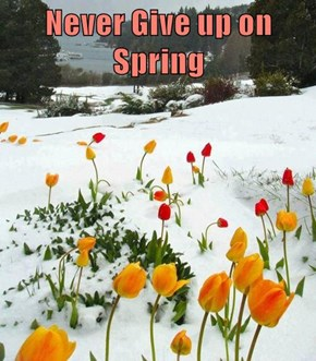 Never Give up on Spring