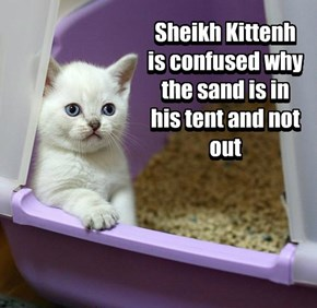 Sheikh Kittenh is confused why the sand is in his tent and not out