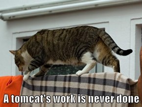 A tomcat's work is never done