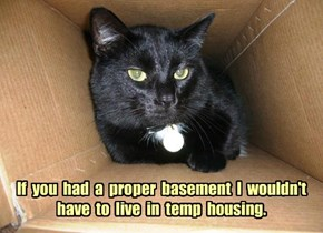 Basement Cat needs a realtor.