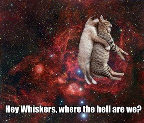 Hey Whiskers, where the hell are we?