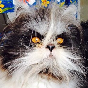 Animal of the Day: Atchoum the Cat Might Actually Be an Evil Wizard