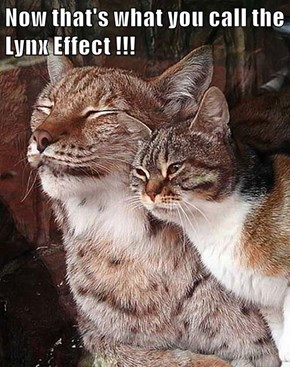 Now that's what you call the Lynx Effect !!!