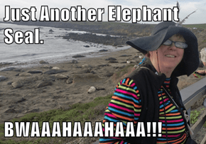 Just Another Elephant Seal.  BWAAAHAAAHAAA!!!