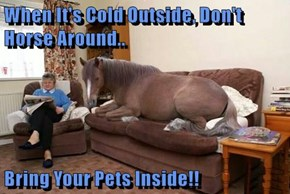 When It's Cold Outside, Don't Horse Around..  Bring Your Pets Inside!!