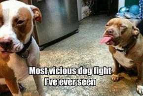 Most vicious dog fight  I've ever seen