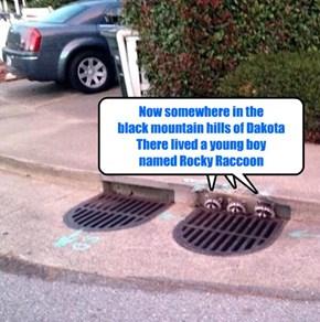 Raccoon buskers