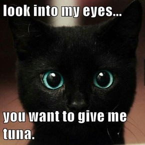 look into my eyes...  you want to give me tuna.