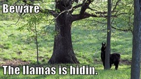 Beware  The llamas is hidin.