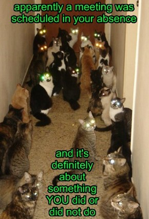 Crazy Cat Lady Nightmare