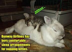 Tired kitties enjoy traveling by Bunway Airlines..