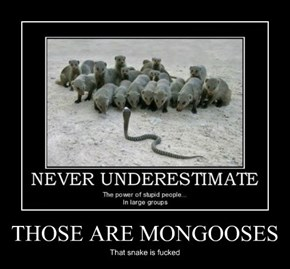 THOSE ARE MONGOOSES