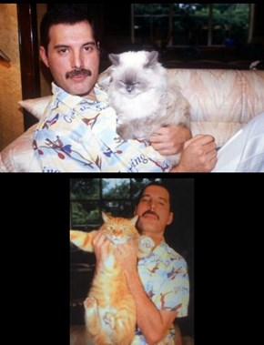 Freddie Mercury's Cats