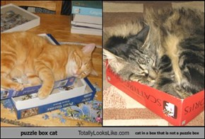 puzzle box cat Totally Looks Like cat in a box that is not a puzzle box