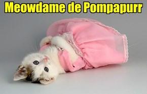 Meowdame de Pompapurr