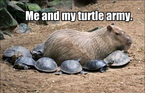 Me and my turtle army.