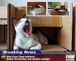 Breaking News - West Coast flood advisory! Batten the hatches and anchors aweigh!