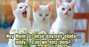 Hey  Mom!  Iz   dese  dayzees  ebida  ...  eddy  ...  Can  we  eetz  dem?