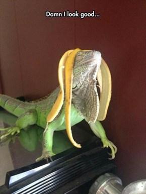 Iguana Do a Little Turn on the Catwalk