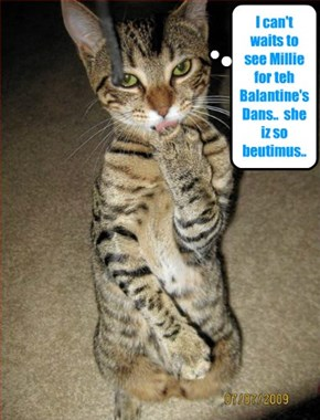 For teh Balantine's Dance, Robin Banks makes shur his paws ar clean befor he picks up his date Millie..