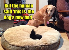 But the human said 'this is  the dog's new bed'.