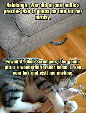 Happy Belated Birthday luvmy8catz!
