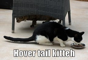 Hover tail kitteh