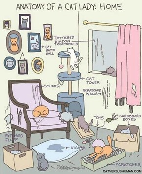 Anatomy of a Cat Lady's Home
